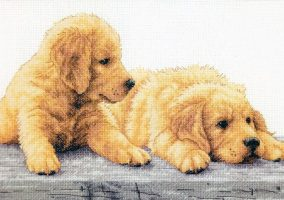 Les chiots Golden Retriever